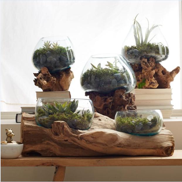 Những chậu Terrarium Bonsai driftwood kết hợp một cách hài hòa